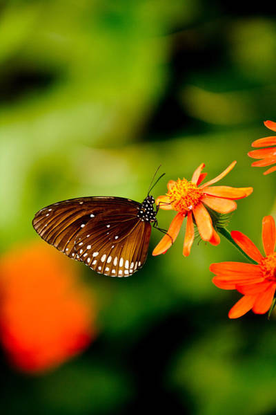 Hakon Photograph - Butterfly With Orange Flowers by Hakon Soreide