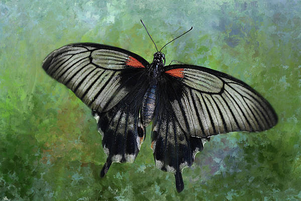 Nectar Mixed Media - Spicebush Swallowtail by Isabela and Skender Cocoli