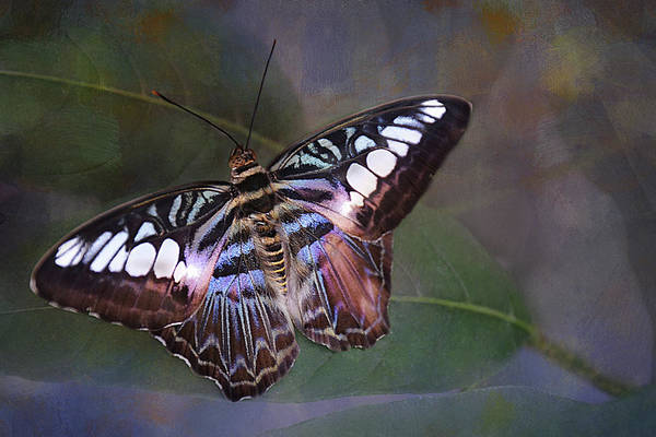 Nectar Mixed Media - Colorful Butterfly by Isabela and Skender Cocoli