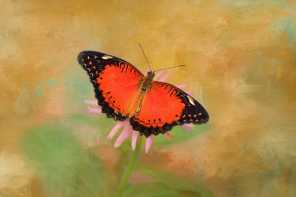 Nectar Mixed Media - Julia Heliconian Butterfly by Isabela and Skender Cocoli