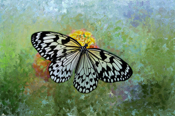 Nectar Mixed Media - Paper Kite Butterfly by Isabela and Skender Cocoli