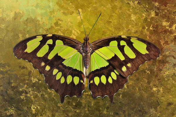 Nectar Mixed Media - Malachite Butterfly by Isabela and Skender Cocoli
