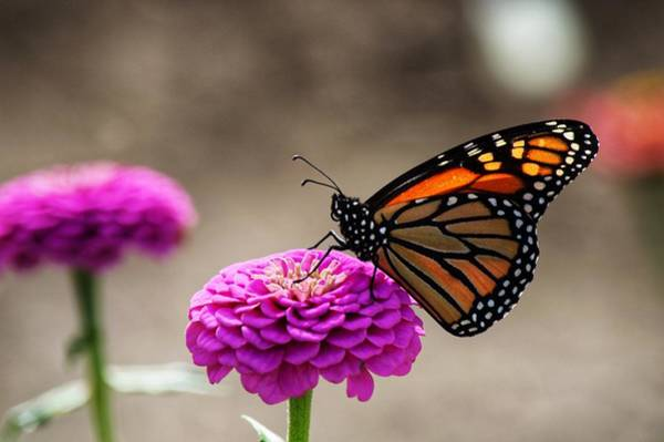Photograph - Butterfly1 by Joseph Caban