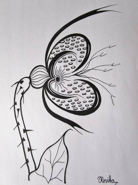 Drawing - Butterflyplant by Rosita Larsson