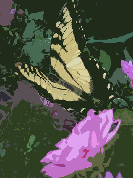 Photograph - Butterfly's Delight by Trish Tritz