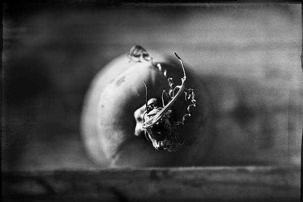 Cucurbit Photograph - Butternut Face Off by Susan Capuano