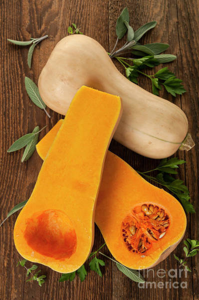 Wall Art - Photograph - Butternut Squash by Elena Elisseeva