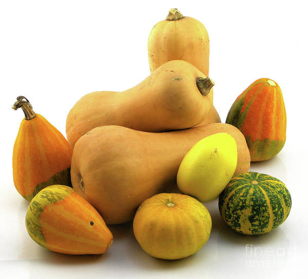 Photograph - Butternut Squash With Gourds  by Ricky L Jones