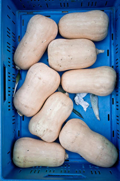 Vegetable Patch Wall Art - Photograph - Butternut Squashes by Tom Gowanlock