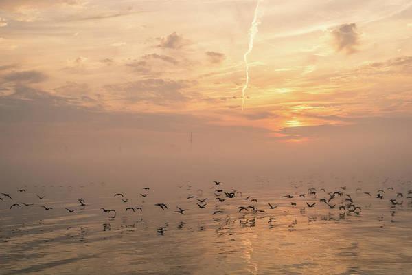 Photograph - Buttery Soft Sunrise With Cormorants by Georgia Mizuleva