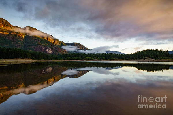Photograph - Buttle Lake by Carrie Cole
