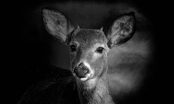 Wall Art - Photograph - Button Buck Deer - Black And White by SharaLee Art
