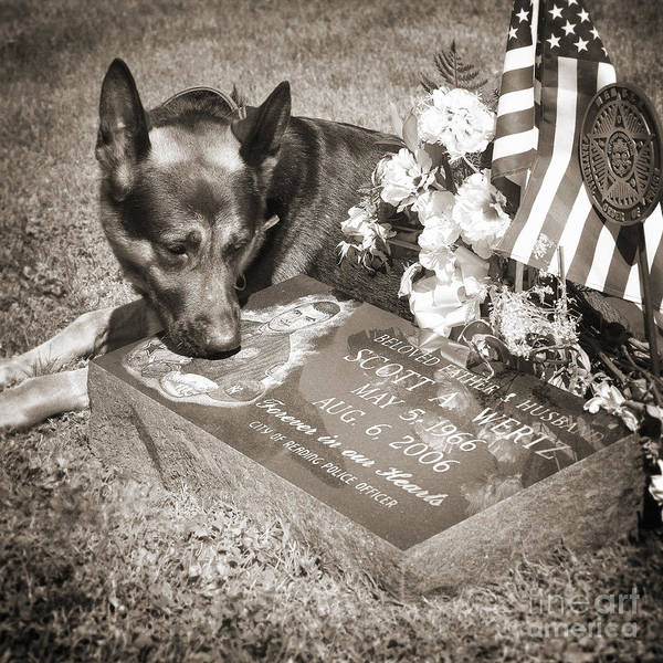 Pa Photograph - Buy A Print. Show Your Support For Reading K9 Police.  Willow Street Pictures.  by Darren Modricker