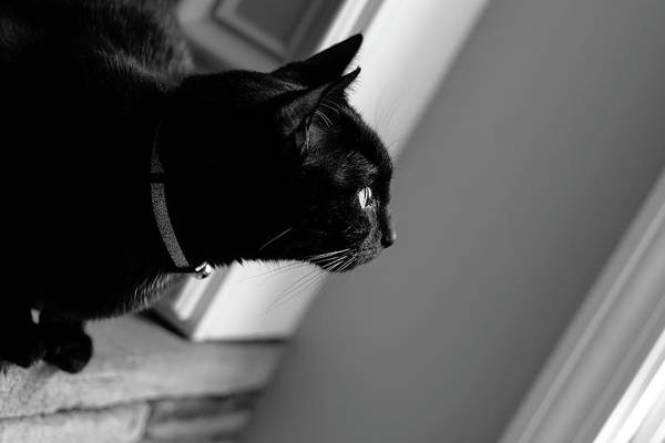Photograph - Bw Bella by Keith Smith