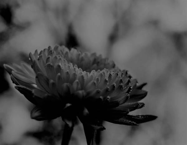 Photograph - Bw Flower  by Keith Smith