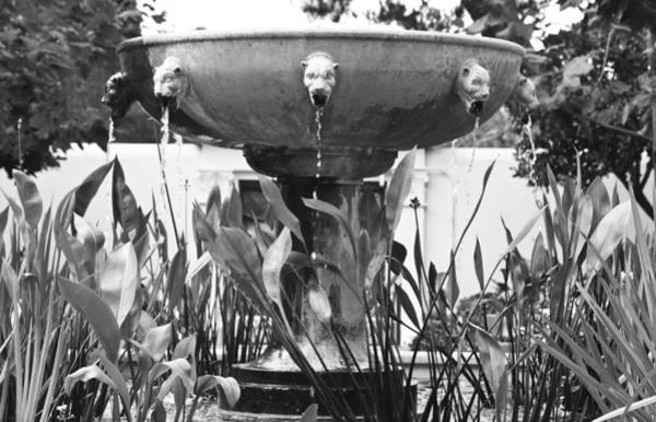 Wall Art - Photograph - Bw Fountain At The Getty Villa by Teresa Mucha