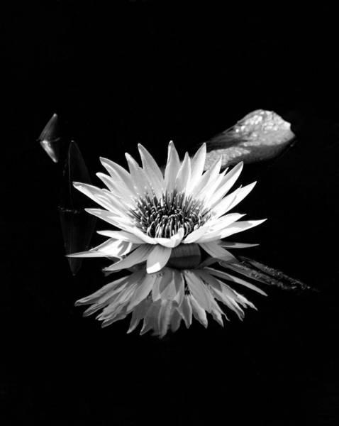 Photograph - Bw Hc White Lotus 2987 Bw_4 by Steven Ward