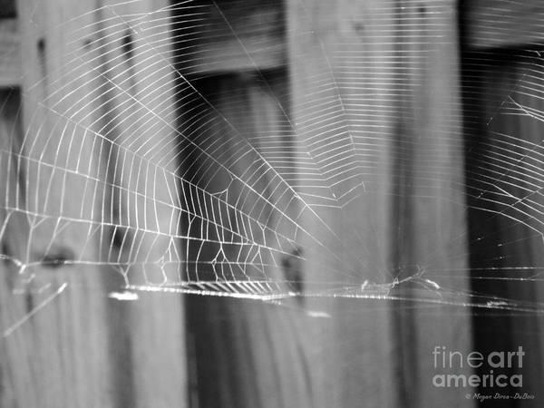 Photograph - Bw Spiderweb by Megan Dirsa-DuBois