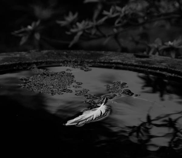 Photograph - Light As A Feather - Bw by Marilyn Wilson
