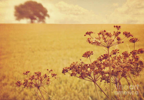 Wall Art - Photograph - By The Side Of The Wheat Field by Lyn Randle