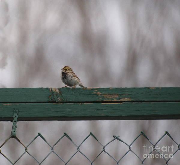 Photograph - Bye Bye Birdy by Vivian Martin