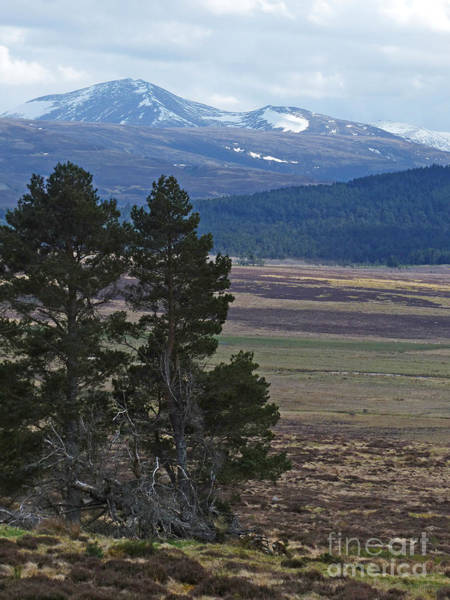 Photograph - Bynack More And Beag - Cairngorm Mountains by Phil Banks