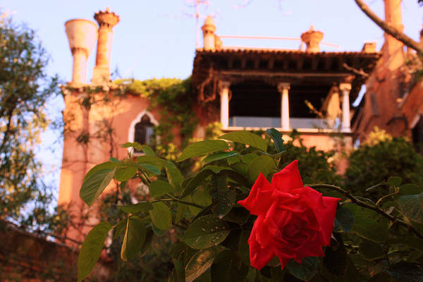 Wall Art - Photograph - Ca' Dario In Venice With Rose by Michael Henderson