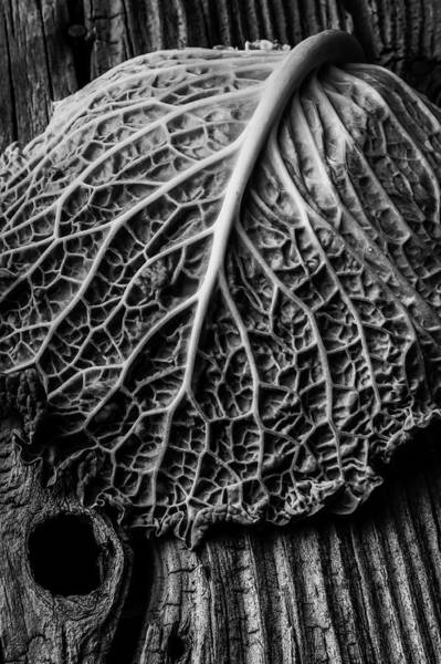 Cabbage Photograph - Cabbage Leaf On Old Board by Garry Gay