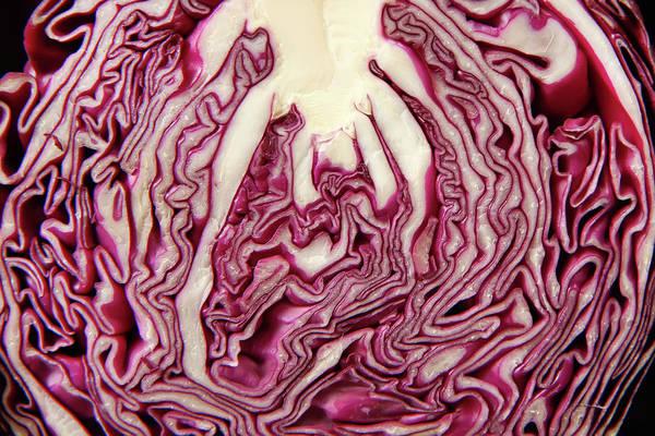 Photograph - Cabbage Market Budapest by KG Thienemann