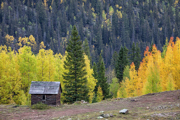 Photograph - Cabin Beside Aspens by Denise Bush