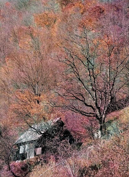 Photograph - Cabin In The Woods by Susan Maxwell Schmidt