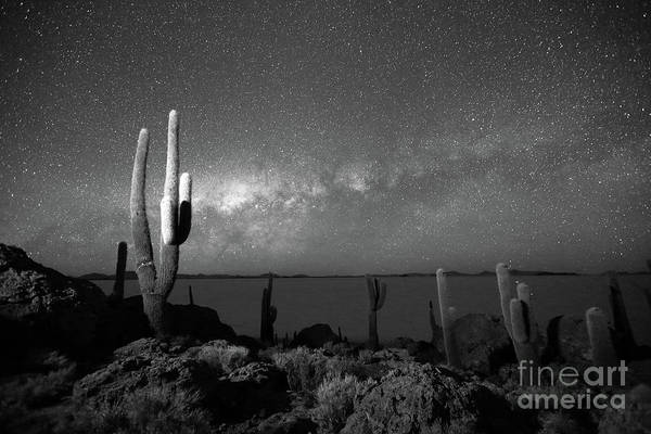 Photograph - Cacti And Glowing Heavens In Black And White Incahuasi Island Bolivia by James Brunker