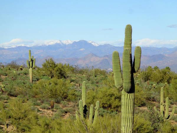 Digital Art - Cacti And Snowy Peaks by Lynda Lehmann