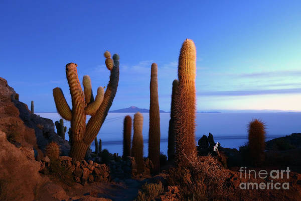 Photograph - Cacti At First Light Incahuasi Island Bolivia by James Brunker