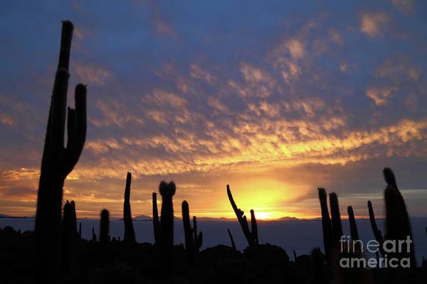 Photograph - Cacti At Sunset Salar De Uyuni Bolivia by James Brunker