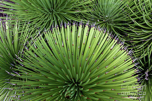 Photograph - Cacti Composition by Susan Vineyard