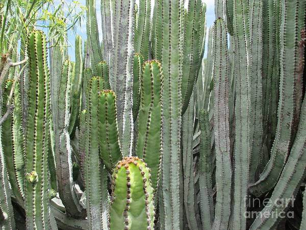 Photograph - Cacti In Malpais De Guimar by Chani Demuijlder