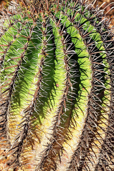 Photograph - Cacti Needles by John Rizzuto