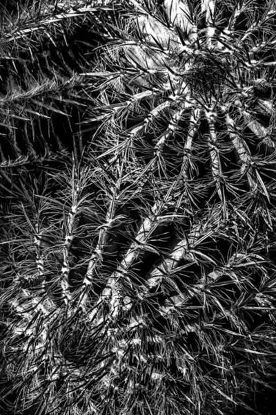 Photograph - Cactus 02 by Edgar Laureano