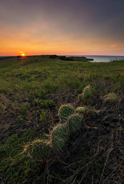 Photograph - Cactus  by Aaron J Groen