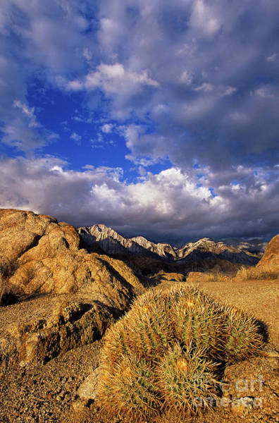 Photograph - Cactus And Clouds Alabama Hills Eastern Sierras California by Dave Welling