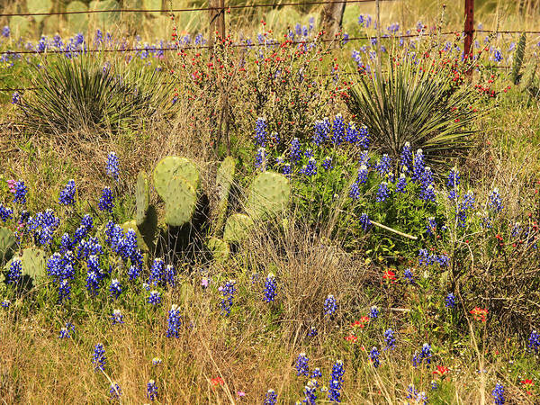 Photograph - Cactus And Shrubs by Charles McKelroy