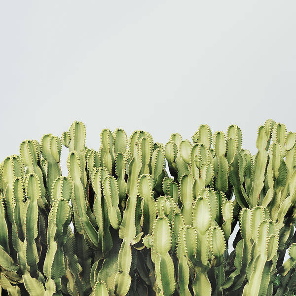Sly Photograph - Cactus And Sky Vintage IIi by Guido Montanes Castillo