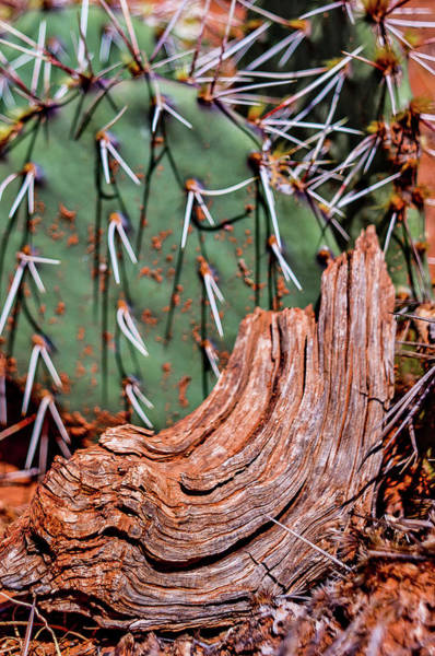 Photograph - Cactus And Wood by Adam Reinhart