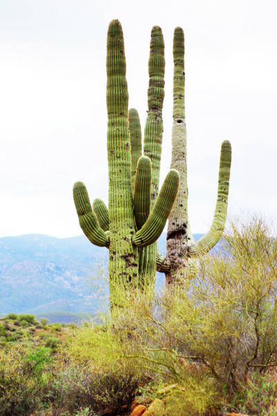 Wall Art - Photograph - Cactus by Angi Parks