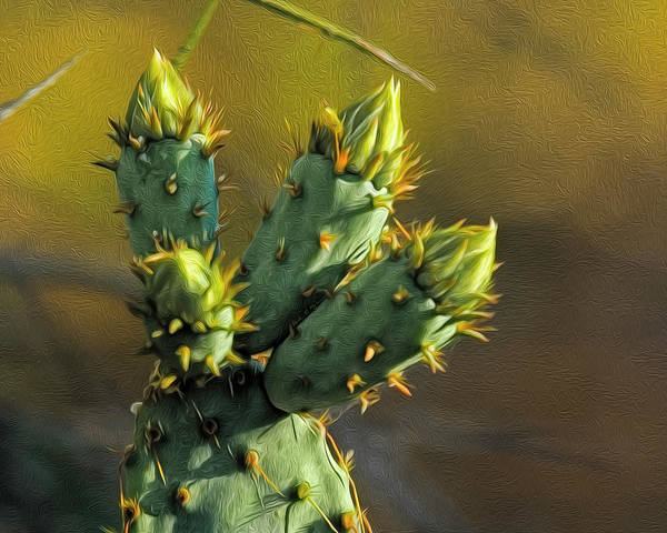 Photograph - Cactus Buds Op52 by Mark Myhaver