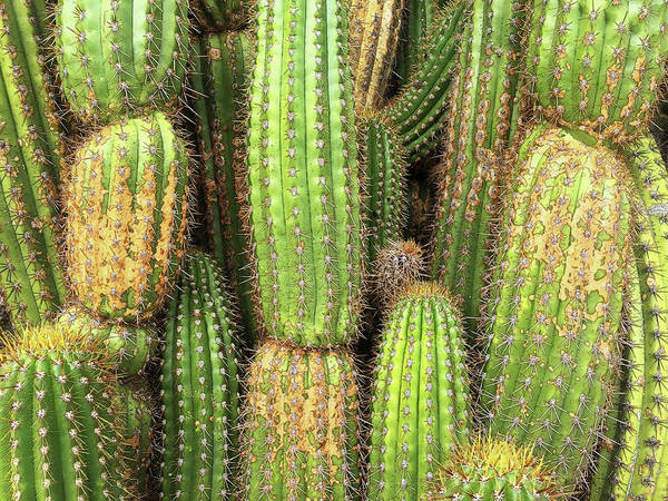Photograph - Cactus City by Matt Cegelis