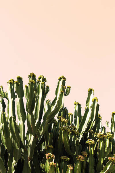 Wall Art - Photograph - Cactus Color by Ana Martinez