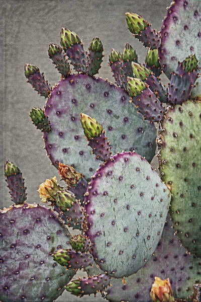 Photograph - Cactus Colors A by Theo O'Connor