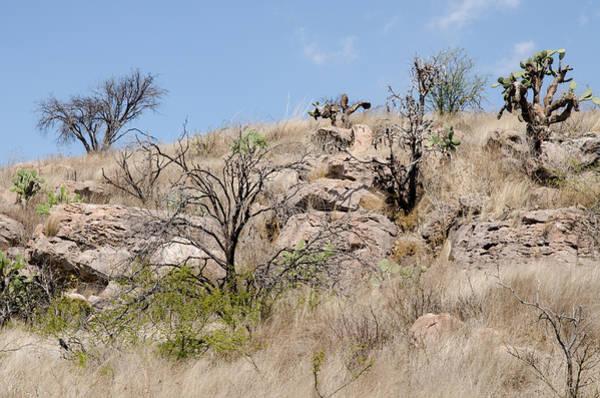 Photograph - Cactus Countryside Near San Miguel De Allende, Mexico by Rob Huntley